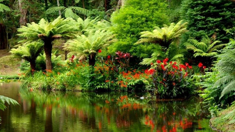 समुद्राशेजारचं जंगल